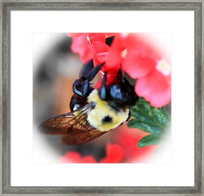 Busy Bee Framed Print by Maureen  McDonald