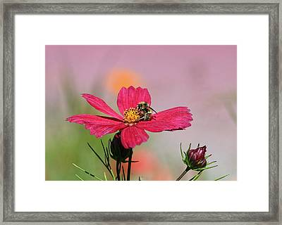 Busy Bee Framed Print by Ronald Lafleur