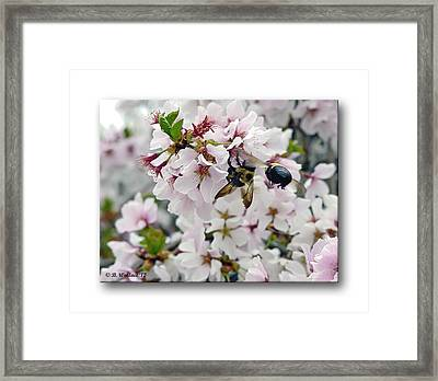 Busy Bees Framed Print by Brian Wallace