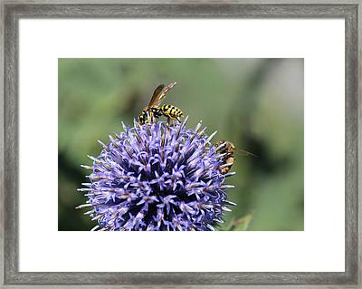 Busy Bees Framed Print by Janet Mcconnell