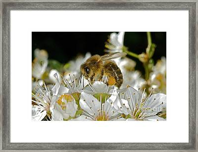 Busy Busy Bee Framed Print