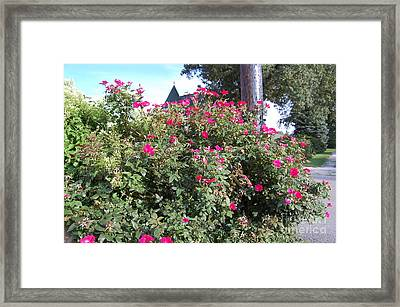 Busy In Pink Framed Print