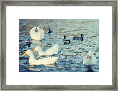 Busy Pond Framed Print by Andrey Kopot
