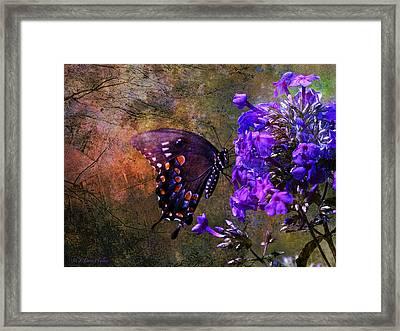 Busy Spicebush Butterfly Framed Print