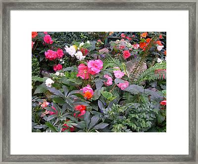 Butchart Begonia Garden Framed Print by Claude McCoy