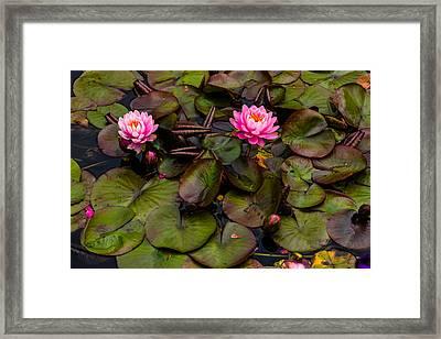 Butchart Gardens Lily Pad Framed Print