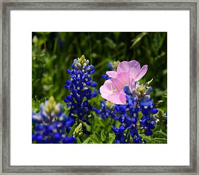 Framed Print featuring the photograph Butter Blue by Lynnette Johns