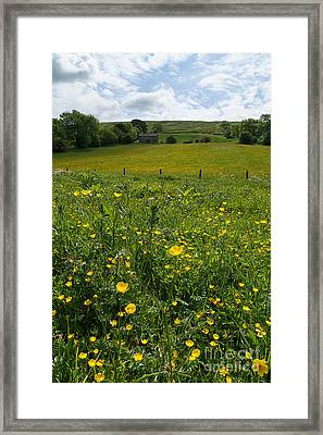 Buttercups In A Wildflower Meadow Framed Print by Louise Heusinkveld