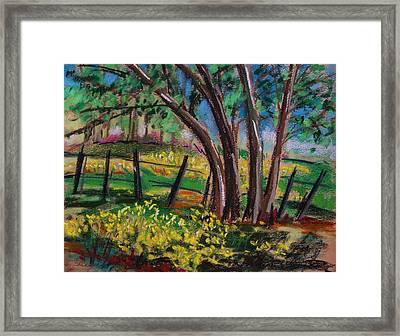 Buttercups Framed Print by John Williams