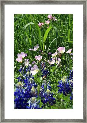 Framed Print featuring the photograph Buttercups by Lynnette Johns