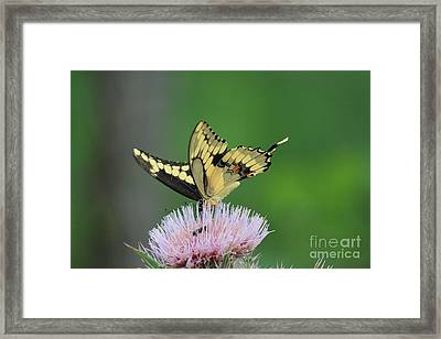 Framed Print featuring the photograph Butterflies Are Free by Kathy  White