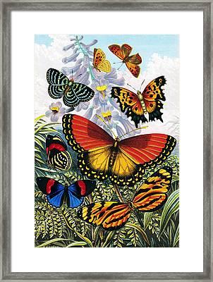 Butterflies, Artwork Framed Print by Sheila Terry
