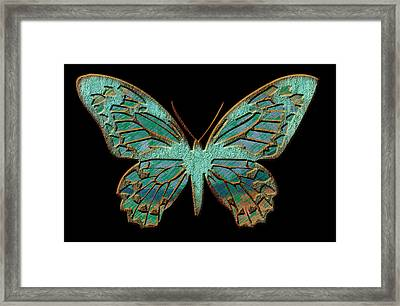 Butterflies By Design Framed Print by Edie Kynard
