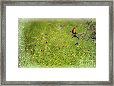 Butterflies Making Love In The Meadow Framed Print