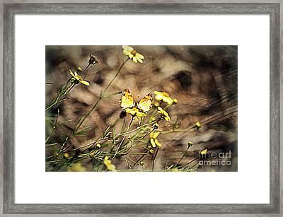 Butterflies Framed Print by Nicky Dou