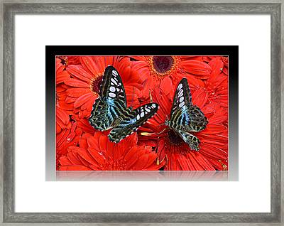 Framed Print featuring the photograph Butterflies On Red Flowers by Rima Biswas