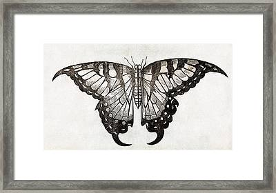 Butterfly, 17th Century Artwork Framed Print