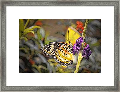 Butterfly 3 Framed Print by Nathan Firebaugh