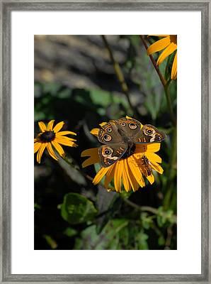 Butterfly 90 Framed Print by Joyce StJames