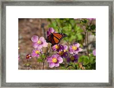 Butterfly 91 Framed Print by Joyce StJames