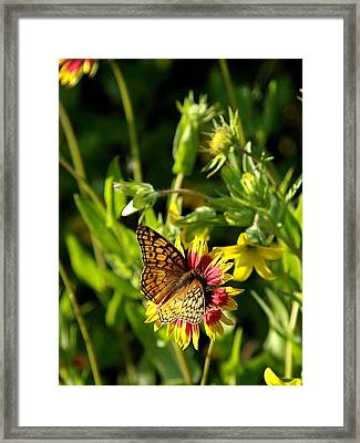 Butterfly And Blankets I Framed Print by James Granberry