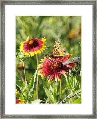 Butterfly And Blankets IIi Framed Print by James Granberry