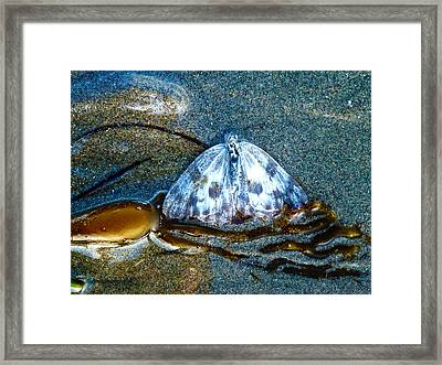 Butterfly And Kelp Framed Print