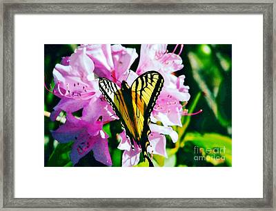 Butterfly And Rhododenren Framed Print by Judy Via-Wolff