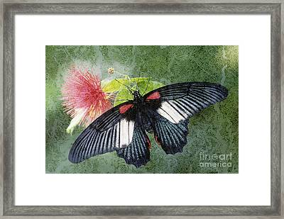 Butterfly And Silktree - Fs000581-a Framed Print