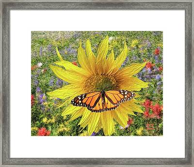 Butterfly And Sunflower Framed Print by Richard Stevens
