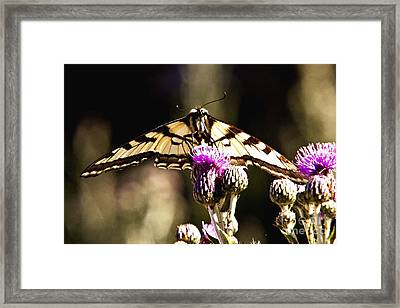 Butterfly And Thistle Framed Print by Angelique Olin