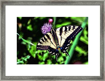 Butterfly And Thistle Framed Print by Don Mann