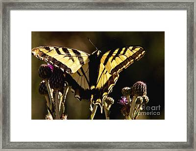 Framed Print featuring the photograph Butterfly And Thistle II by Angelique Olin