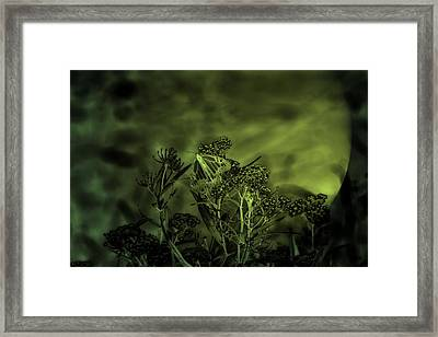 Butterfly At Night  Framed Print