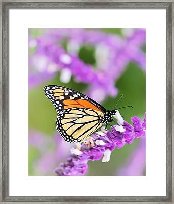 Butterfly Beauty Framed Print by Elizabeth Budd