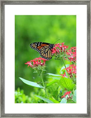 Framed Print featuring the photograph Butterfly Beauty by Laurinda Bowling