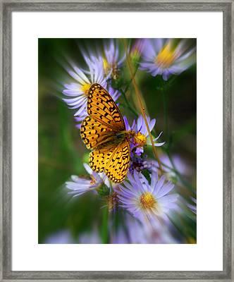 Butterfly Blur Framed Print by Marty Koch