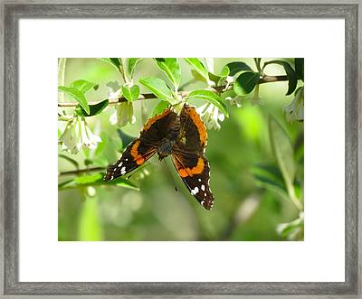 Butterfly Buds Framed Print