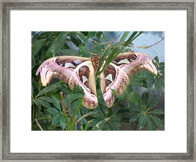 Butterfly Camouflage Framed Print