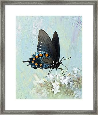 Butterfly Candy Framed Print by Betty LaRue