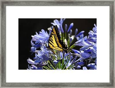 Butterfly Catcher Framed Print by Lynn Bauer