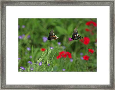 Butterfly Chase Framed Print