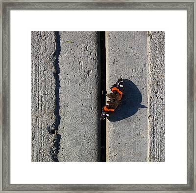 Butterfly Day 2  Framed Print by Lyle Crump