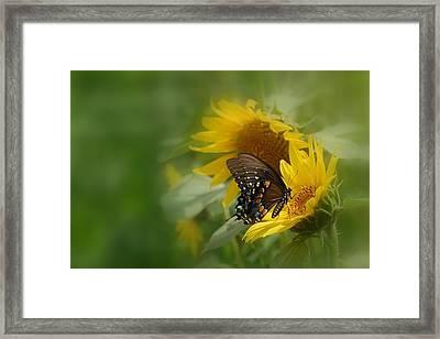 Butterfly Dream Framed Print by David Gunter