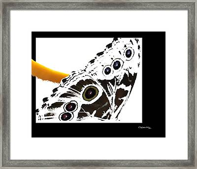 Butterfly Dream Framed Print by Xoanxo Cespon