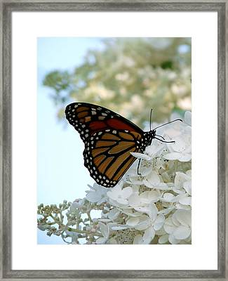 Butterfly Dreams II Framed Print by Terry Eve Tanner
