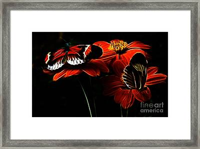Butterfly Duet Framed Print by Darleen Stry