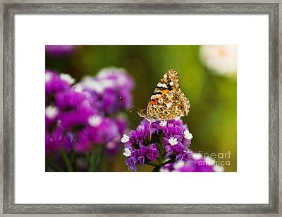Butterfly Effect Framed Print by Syed Aqueel