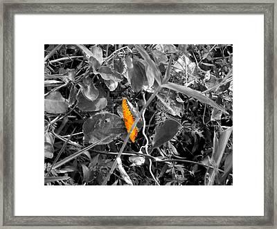 Butterfly Framed Print by Elizabeth  Doran