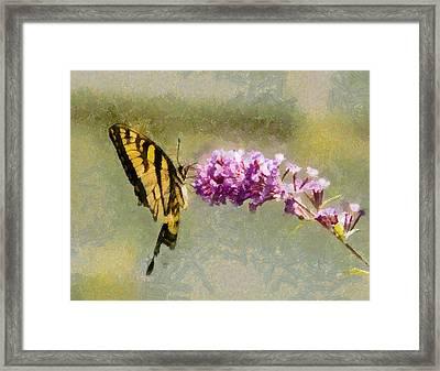 Butterfly Feast Framed Print